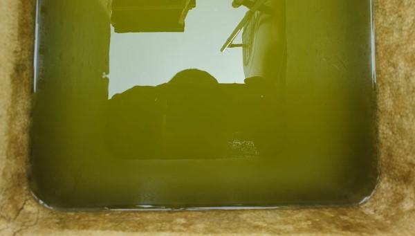 Cách gây tảo nuôi bobo