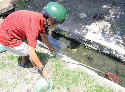 Cách xử lý lăng quăng cho cá