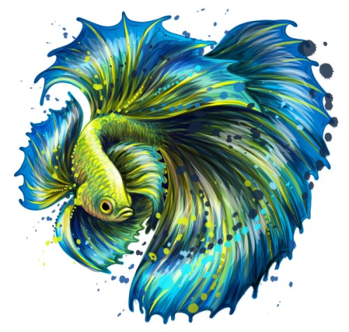 Tặng cá betta