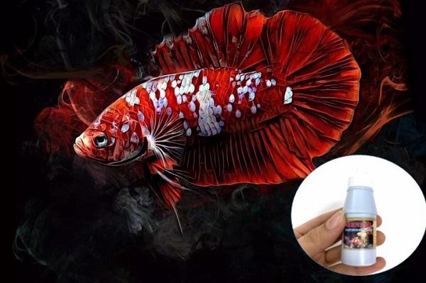 Trị nấm cho cá Betta thế nào?